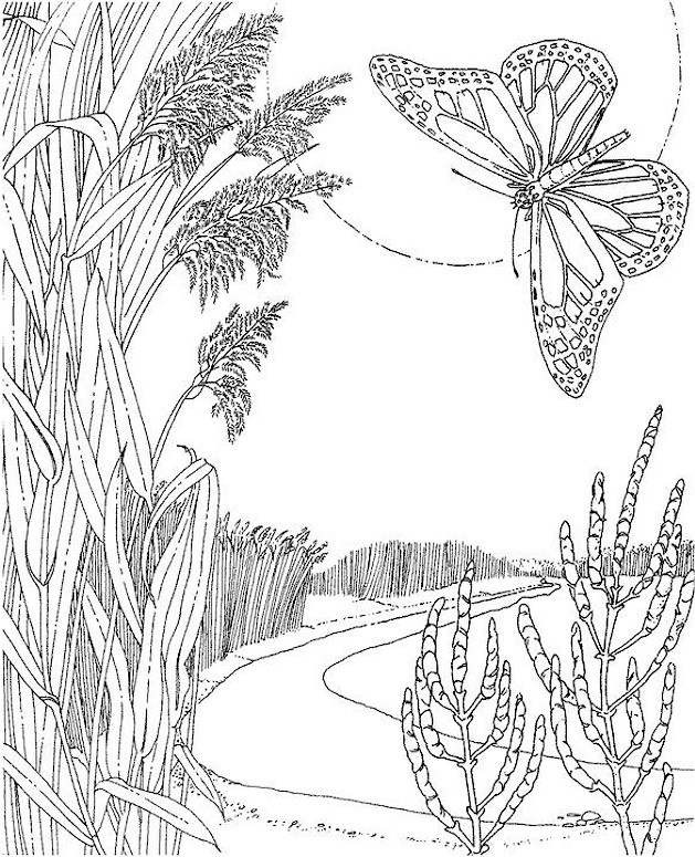 butterfly coloring page - Advanced Coloring Pages Butterfly