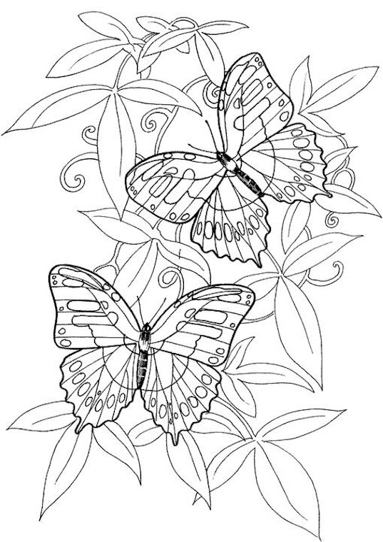 Butterfly Coloring Page Free Coloring Pages For Adults Printable To Color