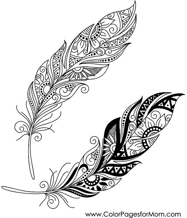 Thanksgiving Coloring Pages Advanced : Advanced coloring pages feather