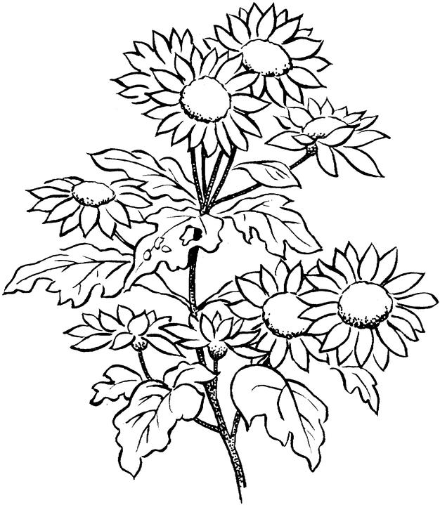free coloring pages of adult flowers