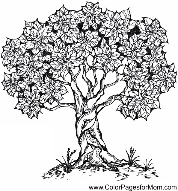 coloring pages of trees with leaves - tree coloring page 26