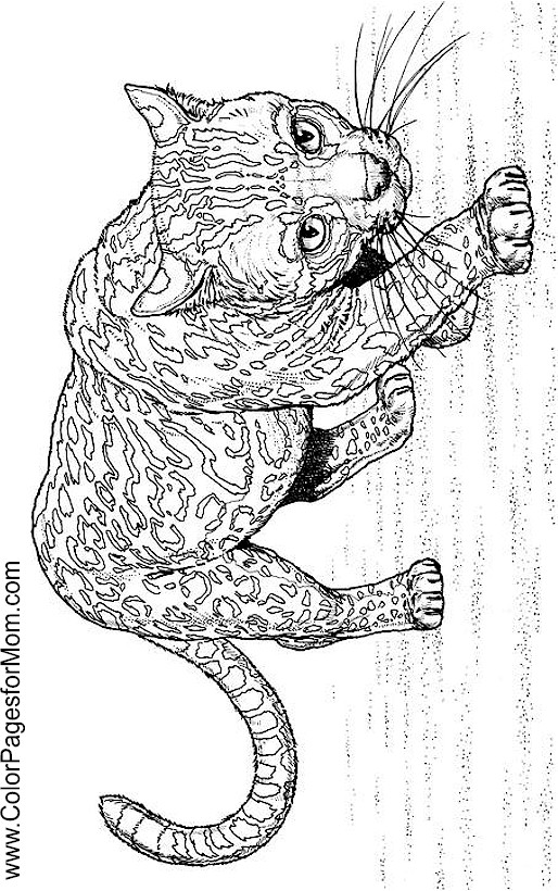 Animals 160 Advanced Coloring Page